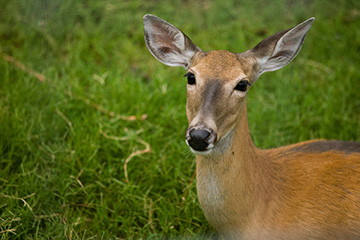 Wildlife experts raise awareness of Chronic Wasting Disease in deer, elk