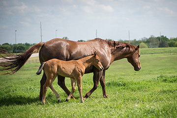 Be sure to optimize a horse's water intake this summer