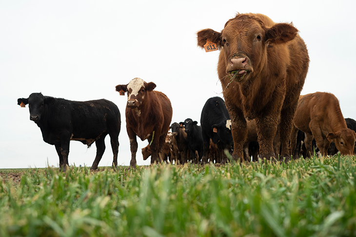Cattle markets, wheat planting on beef producer minds for fall