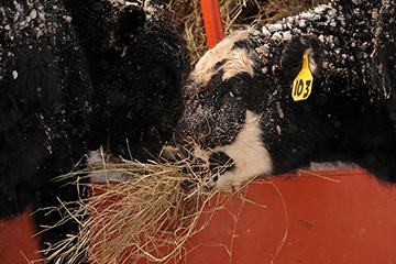 Oklahoma producers face start of hay feeding season