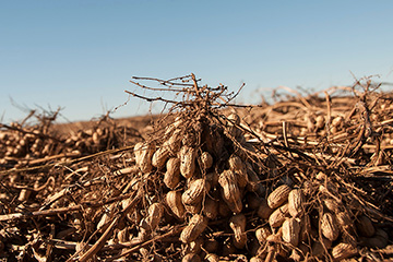 Oklahoma's premier peanut educational event set for March 12
