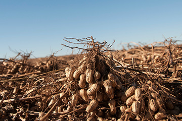 Oklahoma Peanut EXPO set for March 14 in Weatherford