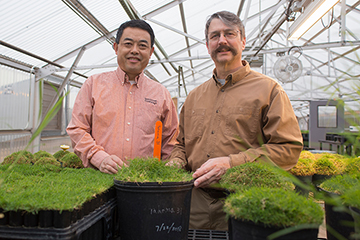OSU-developed bermudagrass takes root as improvement on previous varieties