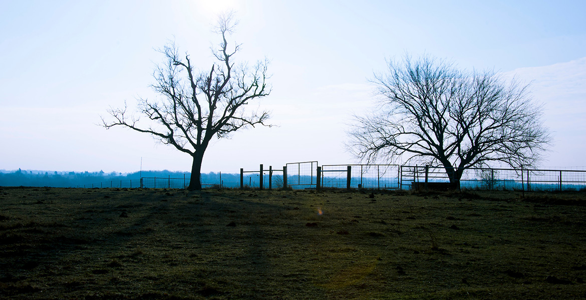 Photo of cross timbers region with old-growth trees amidst a ranch.