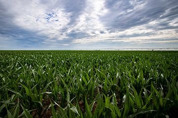 Oklahoma crop producers urged to be proactive