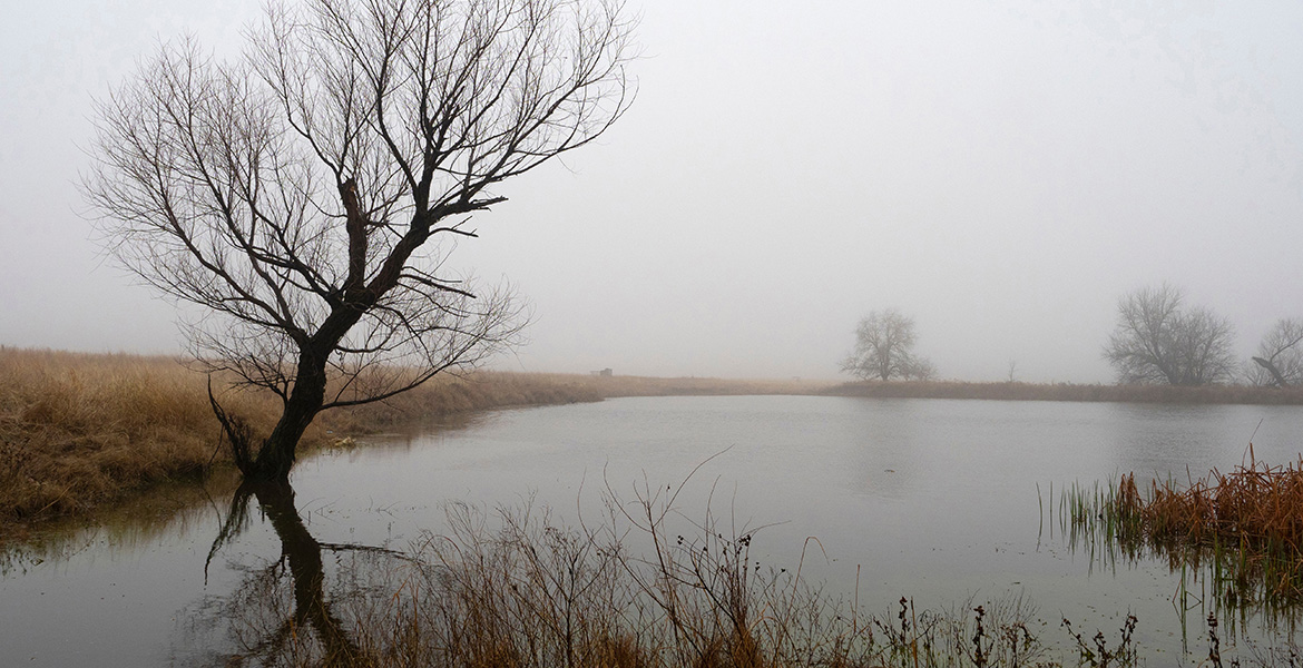 Scenic photo of a farm pond on a foggy morning, still in the throes of winter.