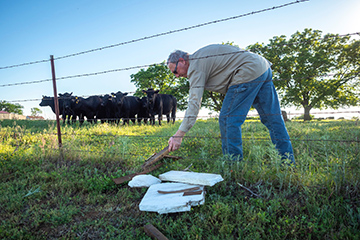 Pasture-related 'hardware disease' poses potential health risk to cattle
