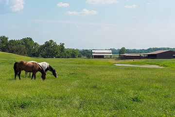 Landscaping for horses requires thoughtful planning