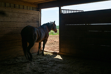 Biosecurity important tool in fighting vesicular stomatitis in horse operations