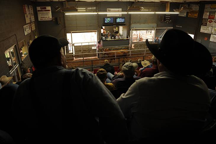 Photo of cattle sale.