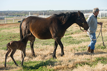 Horse owners urged to plan care during pandemic