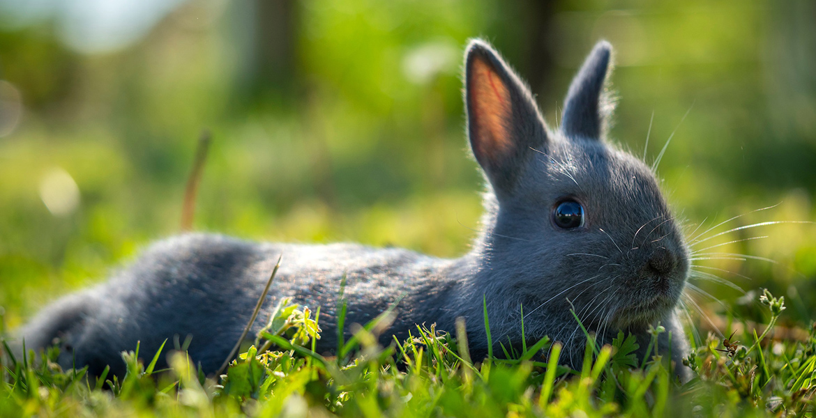 Photo of a cute bunny in the grass.