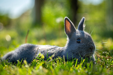 Biosecurity key to preventing spread of rabbit hemorrhagic disease