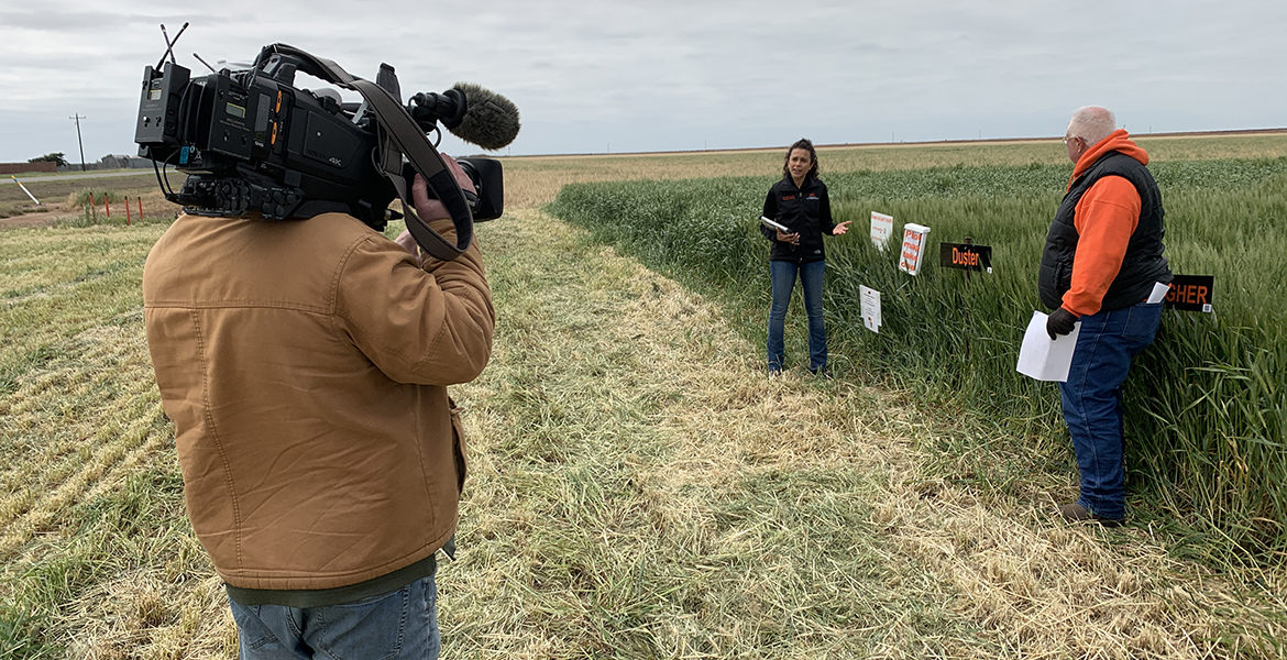 Photo of video producer shooting university wheat experts in a field.