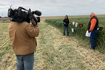SUNUP to feature sneak peek of OSU virtual wheat tour