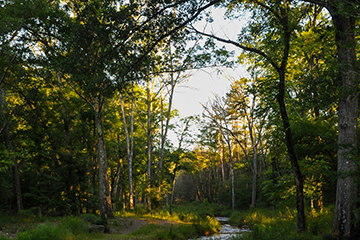 Thinning a forest canopy can pay off big for landowners
