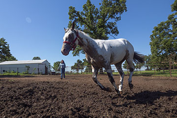 Know how horses respond to hot summertime temperatures