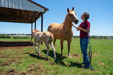 Getting an orphan foal to nurse an immediate need