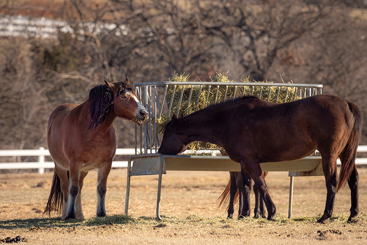Photo of two horses eating hay out of a feeder in a pasture.