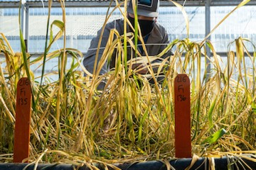 Aging research facilities threaten agricultural innovation