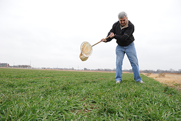 Oklahoma wheat crop looks good, but growers need to remain vigilant