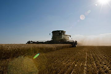Foliar diseases seen in Oklahoma wheat as harvest nears