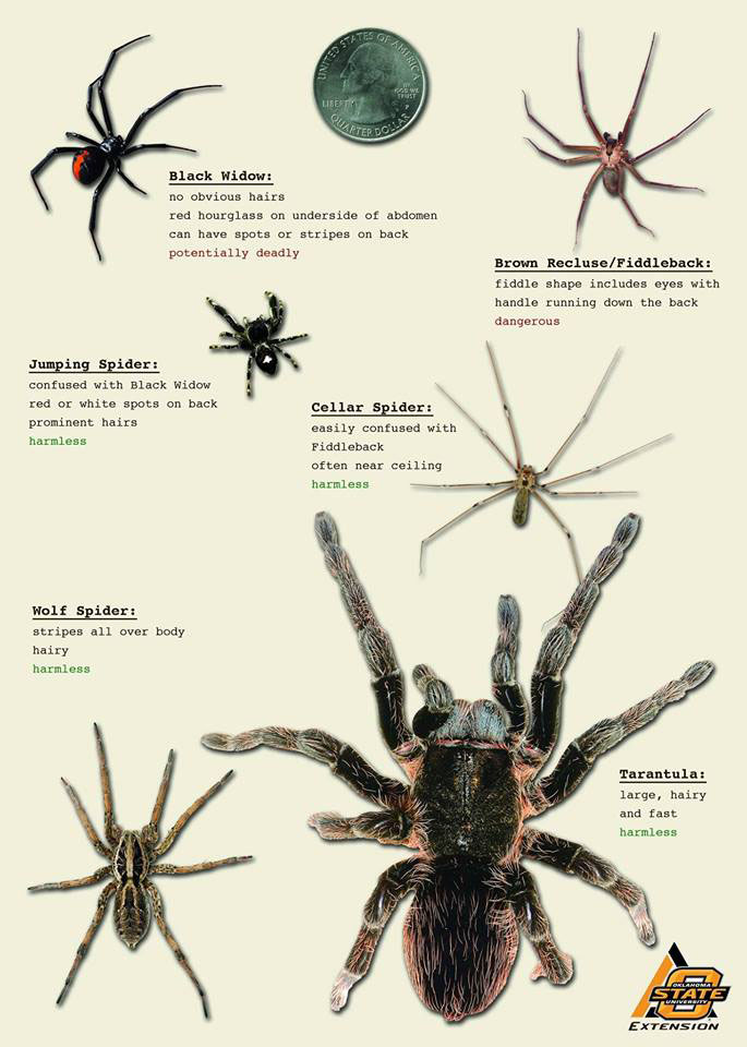 Spiders aren't that scary | News And Information ...