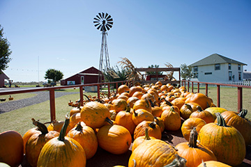 Agritourism Field Day slated Nov. 14 in Tuttle