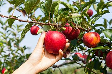 OSU set to host free backyard fruit tree workshop