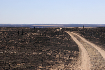 Follow good management practices following wildfires