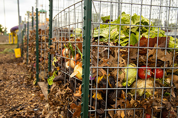 Composting proves good for gardening and reducing waste
