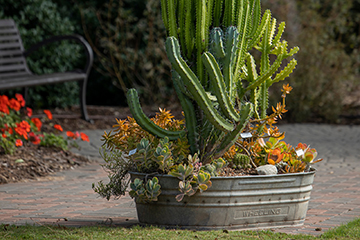 Container garden is a great place to start for novice gardeners