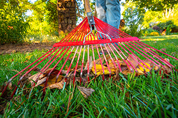 Fall leaves are a great resource for the landscape