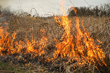 Firewise helps landowners be proactive during wildfire season