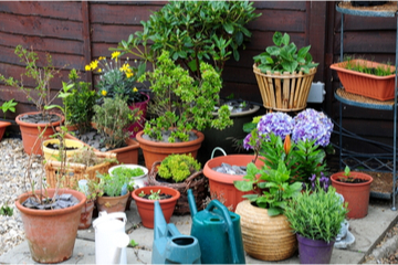 Acclimating outdoor plants to the indoors for winter