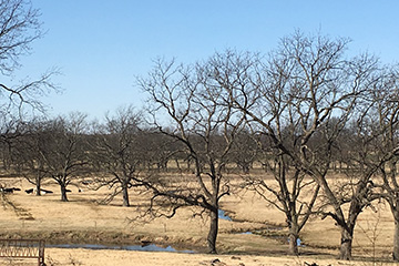 Native Pecan Field Day slated April 25