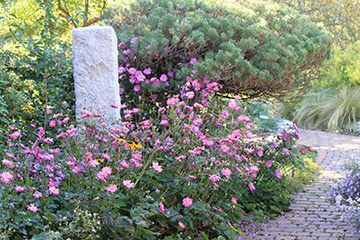 Oklahoma Proven gardening selections revealed for 2021