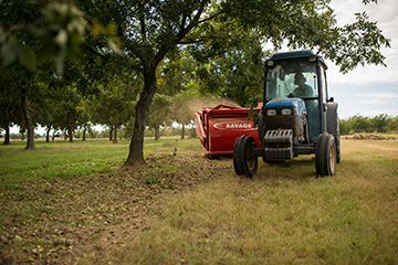 Pecan harvest field days to take place in October