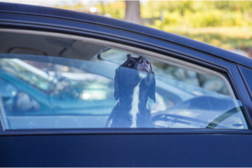 Keeping pets safe in the summer heat