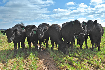 Oklahoma State Ranch Tour slated in Northwest Oklahoma