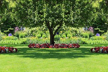Shedding light on shade gardening