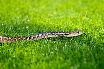Keeping snakes away from your home and yard
