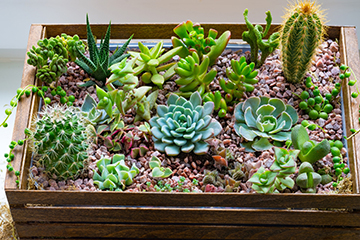 Herb and Succulent Festival slated June 8 at botanic garden