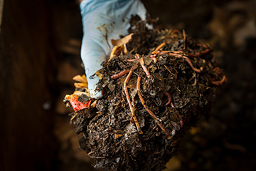 Learn more about soil health and composting at free workshop