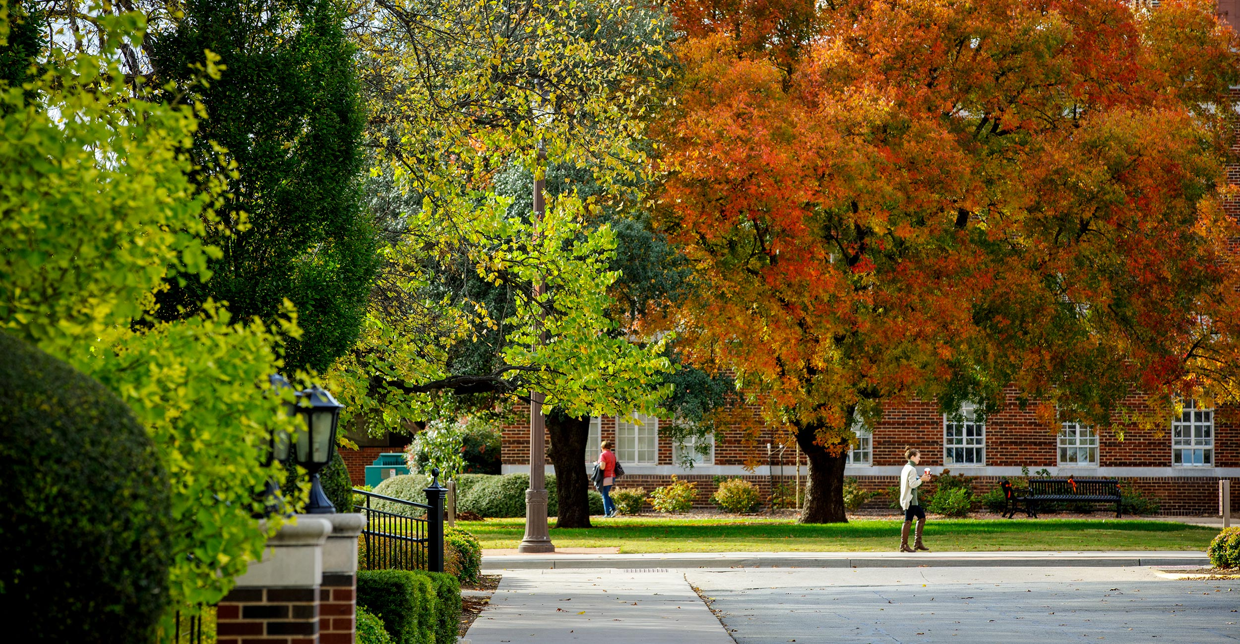 Picture of trees on campus.