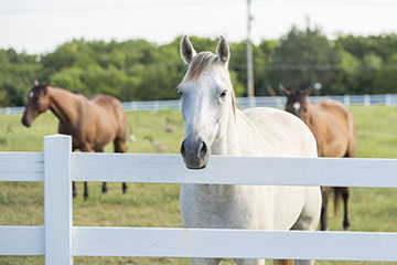 Veterinary Viewpoints: First Aid for Horses