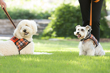 Pete's Pet Posse reinvents itself with virtual therapy