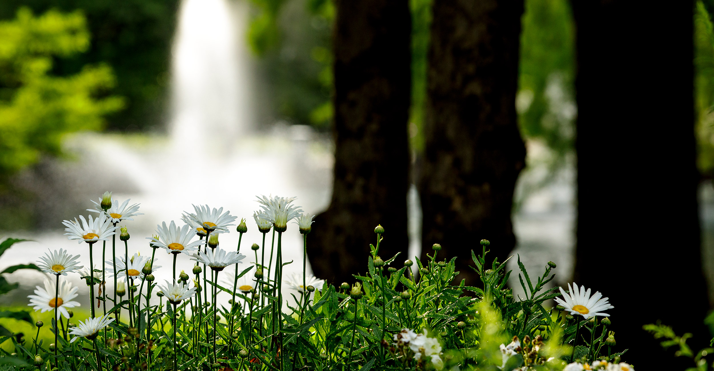 Flowers at Theta Pond.