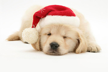 Consider all the factors before gifting a pet