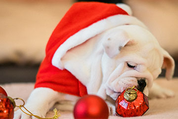 Best Gift for Pets